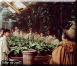 http://potterland.ru/uploads/posts/2008-04/1208269231_herbology.jpg